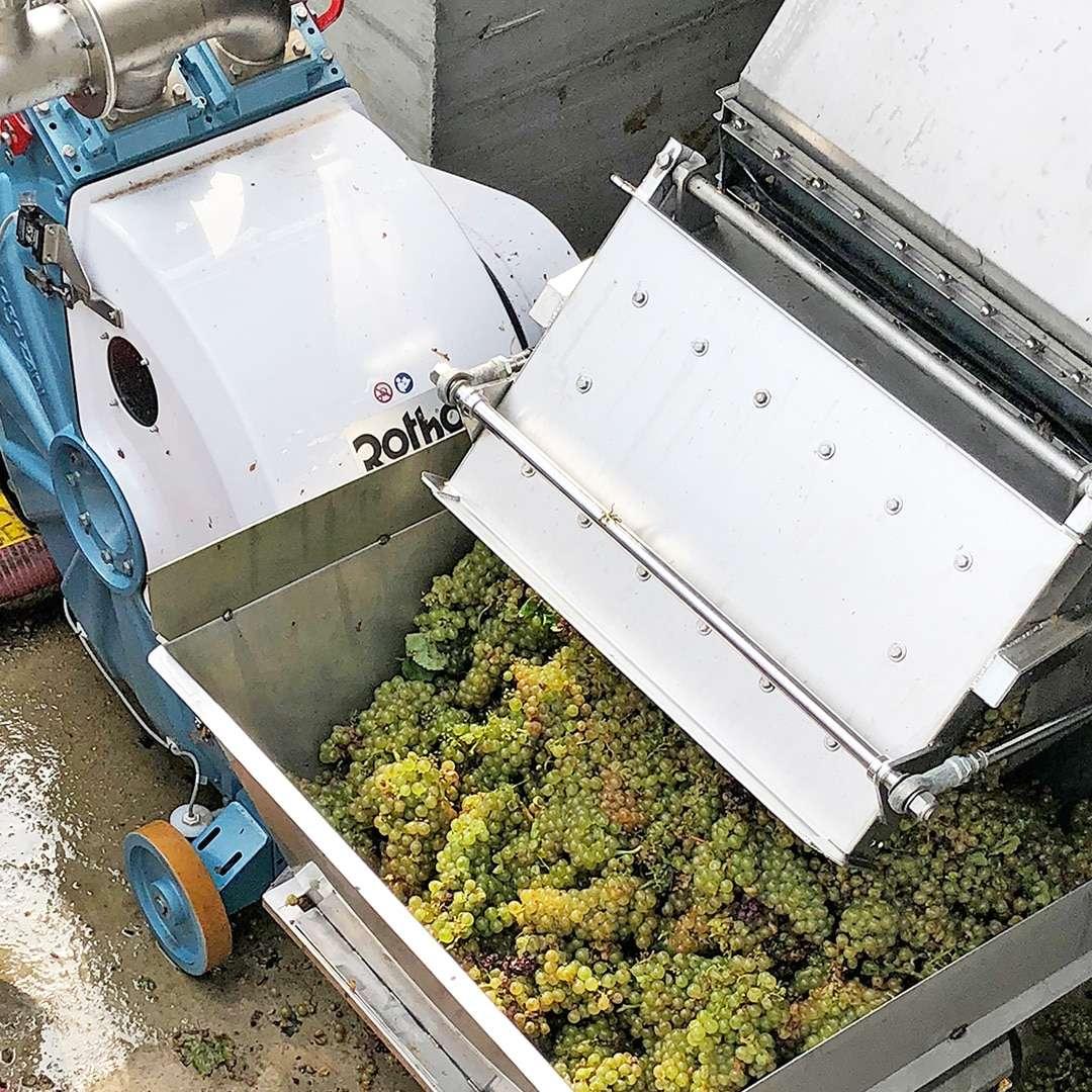 Ragazzini-wine-pump-bunches-of-grapes